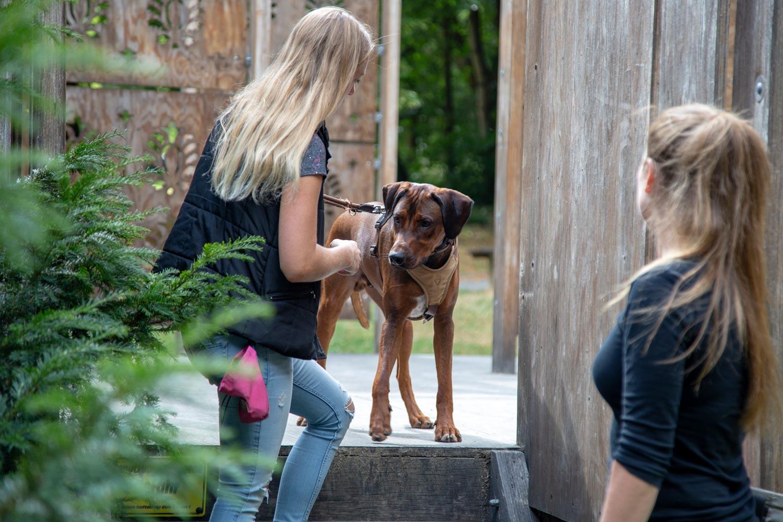 Beratung für Hundebesitzer