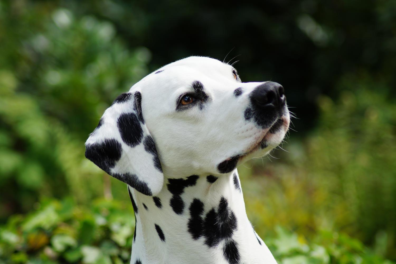 Hunde Kaufberatung