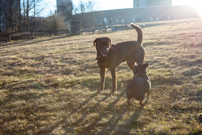 Hundegruppentraining Taunus Feldberg, zwei Hunde interagieren