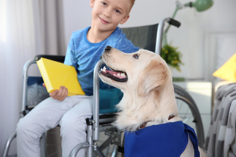 Hunde im pädagogischen Bereich
